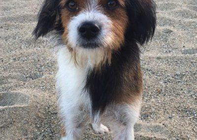 Sardinien Mare e Monti sardischer Hund am Strand ©Matthias Lippstreu